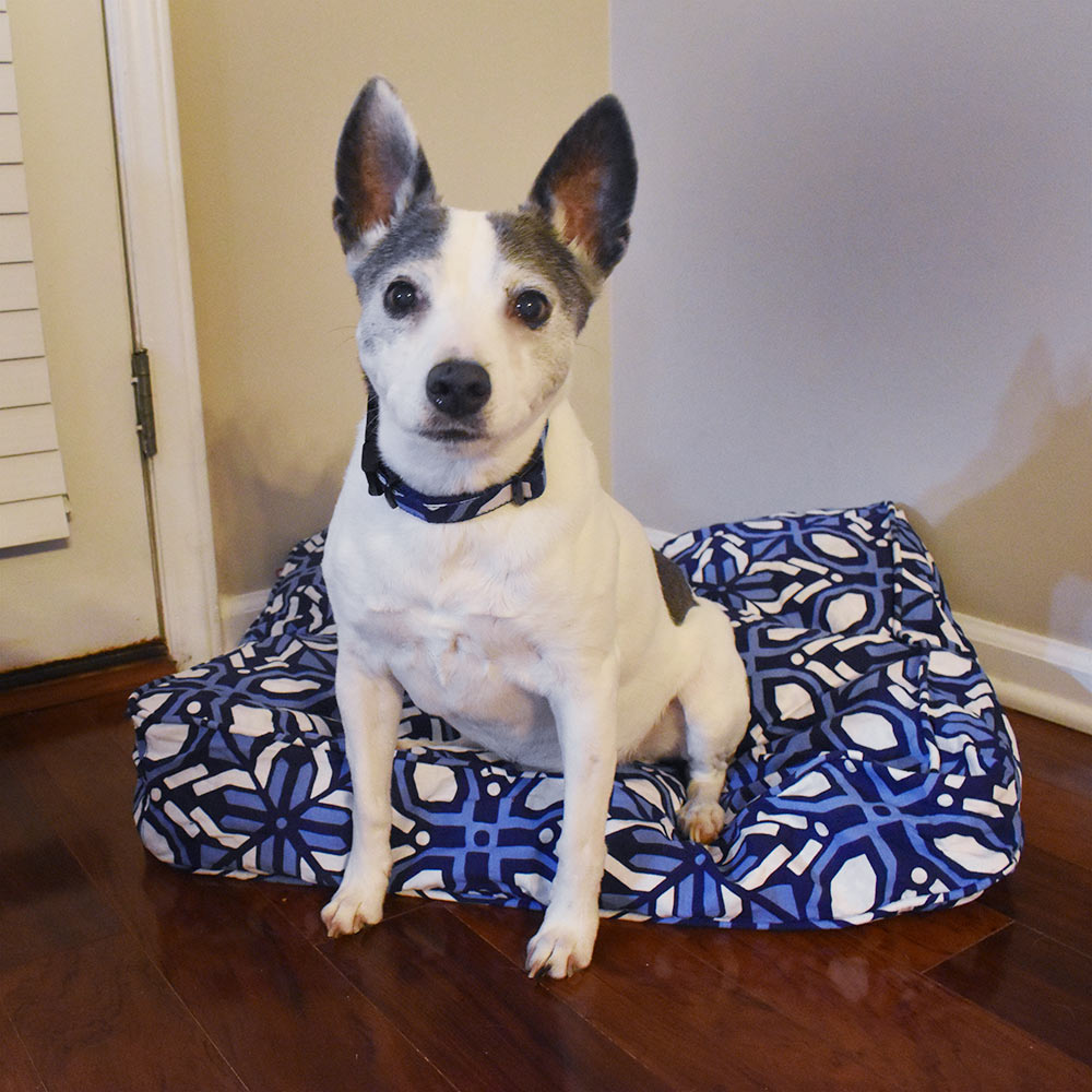cantina navy/corn pet bed cover